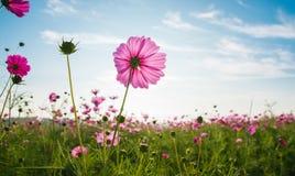 Il giacimento di fiore dell'universo Fotografia Stock Libera da Diritti