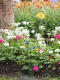 Il giacimento di fiori nel parco immagini stock
