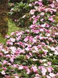 Il giacimento di fiori rosa nel parco fotografie stock libere da diritti