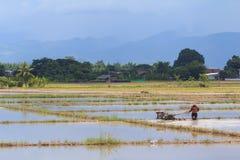 Il giacimento e l'agricoltore del riso sta arando Immagini Stock Libere da Diritti