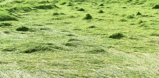 Il giacimento verde del riso dopo la tempesta è passato in Tailandia Fotografie Stock