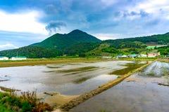 Il giacimento vuoto del riso per i risi della pianta iwhen i mari dell'agricoltura Immagine Stock Libera da Diritti