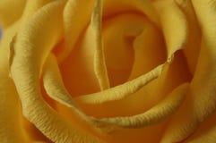 Il giallo è aumentato Mazzo Macro Fotografie Stock