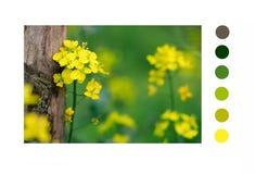 Il giallo è consistito con l'albero fotografie stock