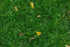 Il giallo caduto lascia su erba verde nell'autunno Fotografia Stock Libera da Diritti