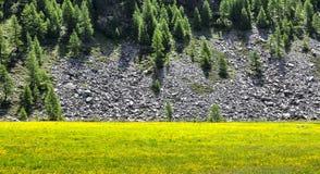 Il giallo dell'Italia (valle di Ayas) fiorisce Fotografia Stock Libera da Diritti