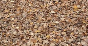 Il giallo di autunno lascia il fondo colorato morbidezza Fotografia Stock Libera da Diritti