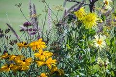 Il giallo e la lavanda fiorisce nel Jardin de Lussemburgo, Parigi Immagini Stock Libere da Diritti