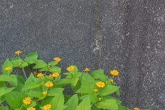 Il giallo fiorisce il cespuglio verde Fotografie Stock