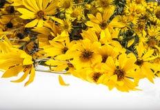 Il giallo fiorisce il fondo Immagini Stock Libere da Diritti