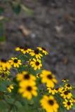 Il giallo fiorisce il fondo Fotografia Stock