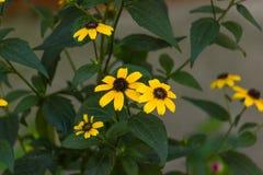 Il giallo fiorisce il fondo Fotografie Stock Libere da Diritti
