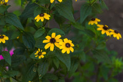 Il giallo fiorisce il fondo Immagine Stock