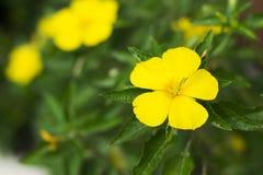 Il giallo fiorisce il fondo Fotografia Stock Libera da Diritti