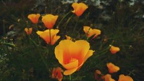 Il giallo fiorisce il primo piano Immagine Stock