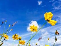 Il giallo fiorisce la nuvola del cielo e ventoso Immagini Stock Libere da Diritti
