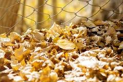 Il giallo ha asciugato le foglie su terra fotografia stock
