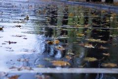 Il giallo lascia il galleggiamento su asfalto bagnato in foresta pluviale autunnale Fotografia Stock Libera da Diritti