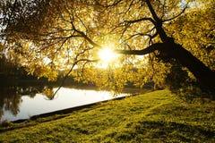 Il giallo lascia l'albero di autunno con luce solare attraverso loro vicino allo stagno calmo nella sera Mosca, Zelenograd, Russi Fotografie Stock Libere da Diritti