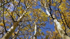 Il giallo lascia la stagione di caduta Forest Tree Tops archivi video