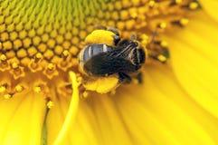 Il giallo raffazzona le gambe Fotografie Stock