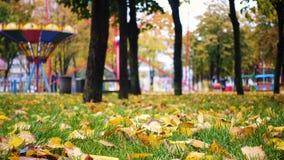 Il giallo va su un'erba verde al parco di autunno archivi video
