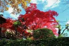 Il Giappone Kyoto Arashiyama Fotografia Stock