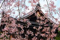Il Giappone Sakura Fotografia Stock Libera da Diritti