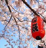 Il Giappone Sakura Fotografie Stock Libere da Diritti