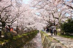 Il Giappone Sakura Fotografie Stock