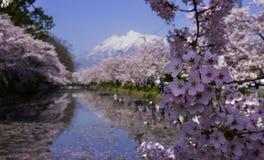 Il Giappone Sakura Cherry Blossoms famosa Fotografia Stock