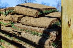 Il giardiniere che applica il tappeto erboso arriva a fiumi i rotoli dell'erba del cortile pronti per installare Fotografia Stock