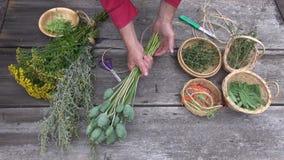Il giardiniere dell'erborista passa la preparazione asciugare le erbe e le spezie video d archivio