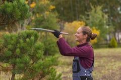 Il giardiniere della donna di sorriso taglia il pino facendo uso delle cesoie Immagini Stock