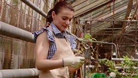 Il giardiniere della donna sta preoccupandosi per le piantine in piccoli vasi con amore in serra video d archivio