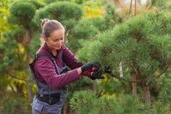 Il giardiniere della donna taglia il pino facendo uso delle cesoie Fotografie Stock