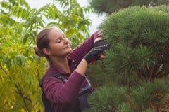 Il giardiniere della donna taglia il pino facendo uso delle cesoie Fotografia Stock Libera da Diritti