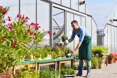 Il giardiniere lavora in una scuola materna - coltivando e vendendo le piante e il flo fotografia stock libera da diritti