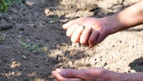 Il giardiniere passa preparare il suolo per la piantina in terra archivi video