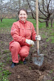 Il giardiniere pianta la piantagione di arbusti dei germogli Immagine Stock