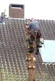 Il giardiniere sta tagliando un albero Fotografia Stock