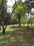 Il giardino Fotografia Stock