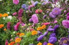 Il giardino anteriore nel villaggio di Rybachiy, Russia fotografie stock