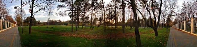 Il giardino botanico di Kosenko Fotografia Stock
