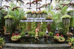 Il giardino botanico tropicale di NongNooch Fotografia Stock Libera da Diritti