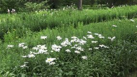 Il giardino botanico a Vitebsk video d archivio