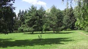 Il giardino botanico a Vitebsk stock footage
