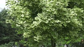 Il giardino botanico a Vitebsk archivi video