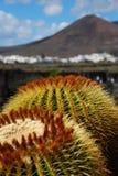 Il giardino del cactus, Lanzarote Fotografia Stock