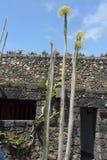 Il giardino del cactus nell'isola di Lanzarote in isole Canarie Fotografia Stock Libera da Diritti
